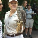 Staff holding owl at Australia Zoo