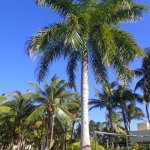 Gorgeous palm near a small pool.