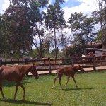 Cavalos para passeio