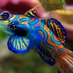 Fishbud2014