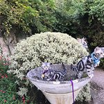 The foliage of the English garden (with our kittens)