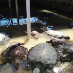 Turtle Island Foto