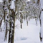 El Bosque de los Huskies