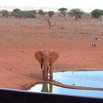Ngutuni Safari Lodge Foto