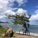 Tree on tip toes