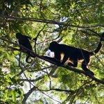 Foto de Jungles Edge