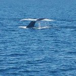 Just went today and saw 3 humpback whales, just awesome