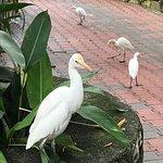 lovely flock