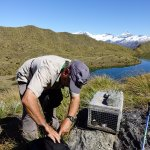 Checking stoat traps in Mt Aspiring national park