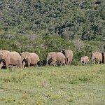 Bush Lodge - Amakhala Game Reserve Foto