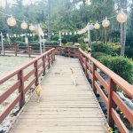 Photo of Jeju Kimnyoung Maze Park