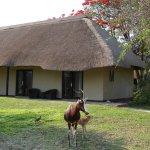 Photo of Mokuti Etosha Lodge