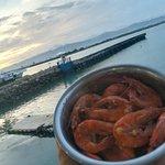 Bucket Shrimpsの写真