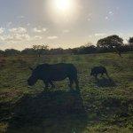sightings- rhino