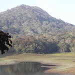 Foto de Periyar National Park