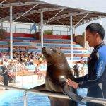 Photo of Sealanya Dolphinpark