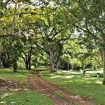 Streamside path, en route to palm area