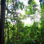 un regard vers la canopée