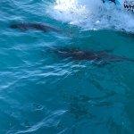Photo de Auckland Whale & Dolphin Safari