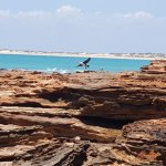 Bird in flight off the rocks of Gantheaume