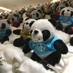 Photos of my recent stay at the Panda Hotel
