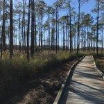 Big Branch Marsh National Wildlife Refuge Foto