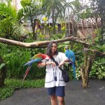 taking ap picture with parrots? why not