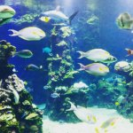 Photo of Aquarium des Lagons Nouvelle Caledonie