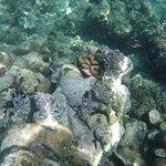 Photo of Mafia Island Diving