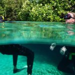 Immerse yourself and discover the beauty of cenotes