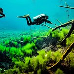 Cenote Carwash - Discover a whole new world underwater