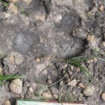 Hippo footprint outside my room. Book for scale.