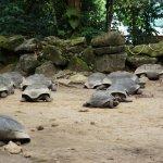 Seychelles National Botanical Garden - Tortoise