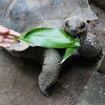 Seychelles National Botanical Garden - Tortoise feeding