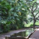 Peaceful area along the Allerton garden stroll