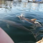 Dolphins playing along the way