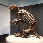An exhibit inside the La Brea Tar Pits.