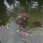 Photo of Mnarani Marine Turtles Conservation Pond