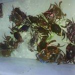 Foto de Chaiyo Seafood Restaurant