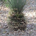 Cactus, Legacy Golf Resort, Phoenix, Arizona