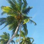 Photo de Ursula Beach Club