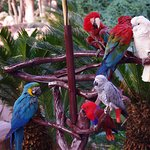 Tropical Birds in the Habitat were great