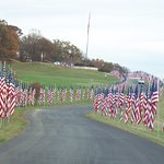 Veterans day flag display...they also do this on Memorial Day.