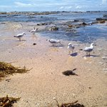 Blue Lagoon Beach Resort Photo