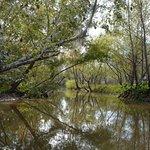 Фотография Beyond the Bayou