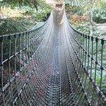 The Burma Rope Bridge