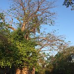 Foto de Shamba Kilole Eco Lodge