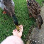 feeding ducks outside the caravan
