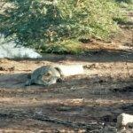 Foto de Voyager Ziwani, Tsavo West