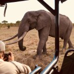 Photo of Hamiltons Tented Safari Camp